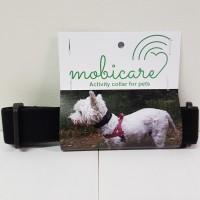 activity collar dog